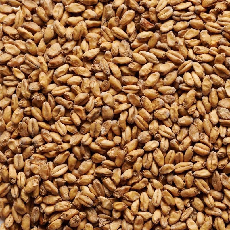Joe White Wheat Malt x 25kg